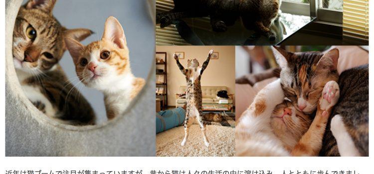 クリエイター紹介メルマガ「imagenavi 今旬作家」第八弾配信