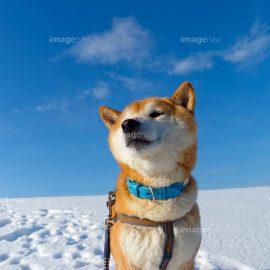 【作品募集】日本犬の素材募集!