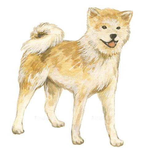 作品募集日本犬の素材募集 Imagenavi Creator Antenna