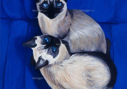 【作品募集】猫の品種が分かるイラスト募集